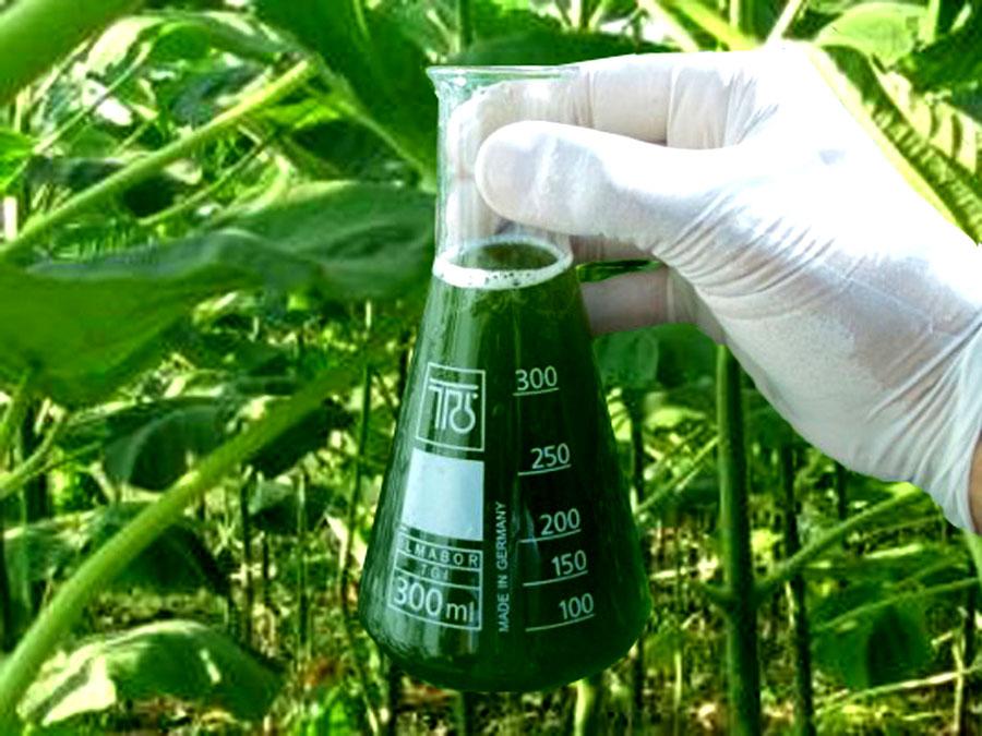 для жидкого биотоплива
